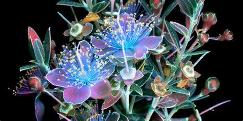 tahukah kamu bunga  bisa memancarkan sinar