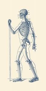 Side View Skeletal Diagram