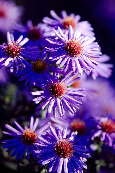 perennial flowers   stunning design