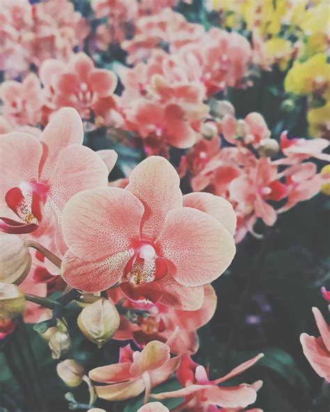 aesthetic flowers wallpapers