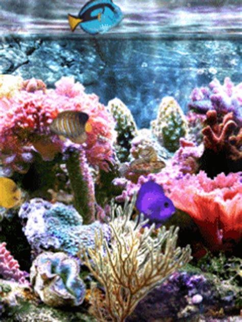 logo anim 233 aquarium 5 aquariums anim 233 s gratuits pour ton mobile