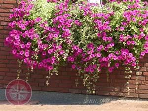 Balkonkästen Bepflanzen Beispiele : balkonk sten bepflanzen beispiele garten tipp balkonk ~ Lizthompson.info Haus und Dekorationen