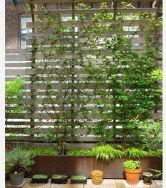 colonne rosier tuteur de jardin en metal arceau rose With exceptional idee de deco jardin exterieur 2 albizia plantation taille et entretien
