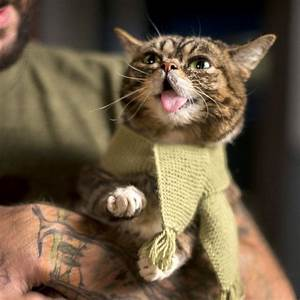 46 best images about Lil Bub on Pinterest