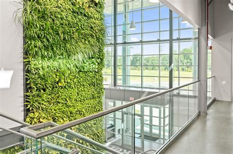 living green wall panels vertical gardens ambius