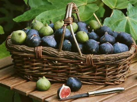 cuisiner des figues cuisiner la figue