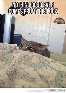 Top 30 Funny Cat Memes | Quotes and Humor
