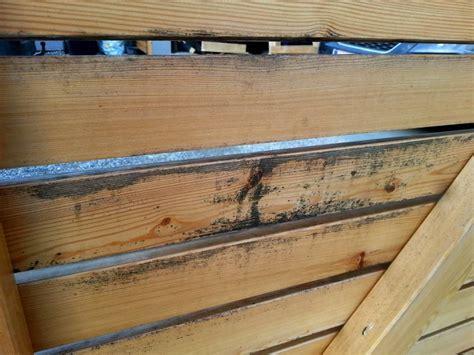 schimmel auf unbehandeltem holz entfernen schimmel auf holz bauforum auf energiesparhaus at