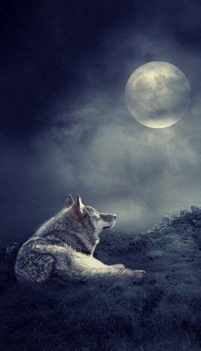 pleine lune loup garou wolf pictures wolf dog wolf life