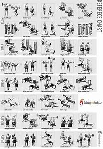 Bodybuilding Exercise Chart