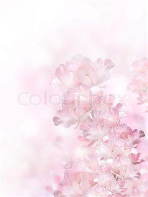 pink spring flowers   bokeh stock image