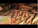 Asian eel live sale supermarket