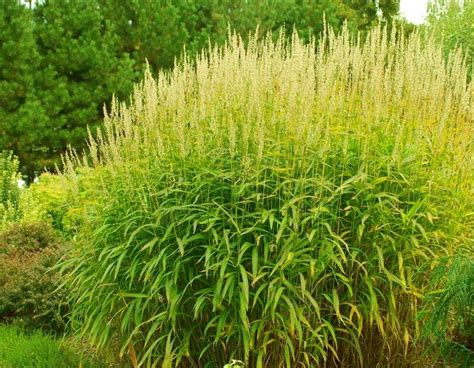 landscape grass types 12 best images about jardins on pinterest trees raised beds and landscaping