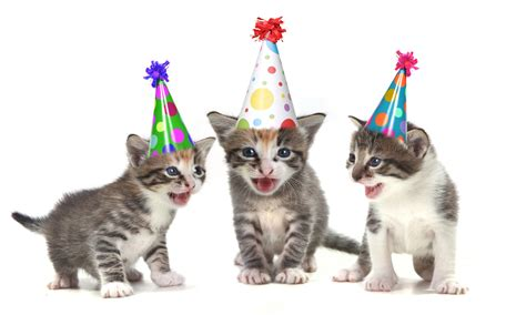 birthday cats images pictures comments graphics scraps for
