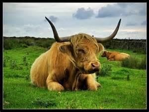 Cow Pasture Desktop Backgrounds