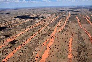 Kalahari Desert - Wikipedia