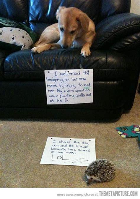 funny dog shaming ideas  pinterest dog