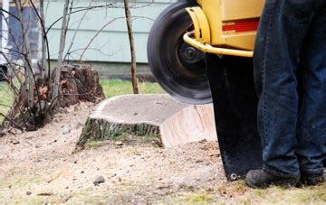 tree stump removal  st helens compare quotes  advice