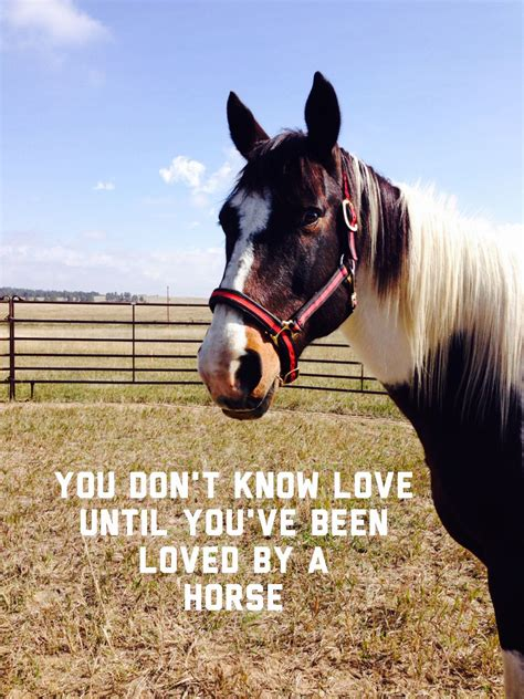 horse ever horses most sayings quotes cute visit true funny farm equestrian