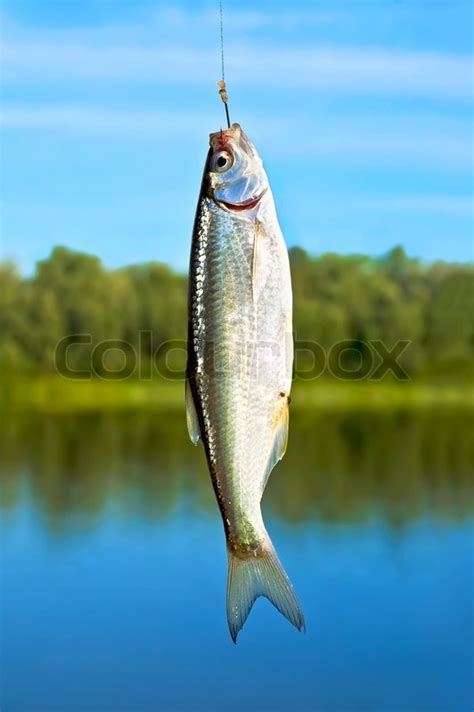 silver small fish   hook   blue sky rivers