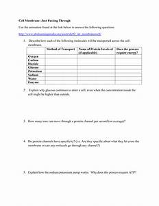 Ion Pumps Worksheet Answers