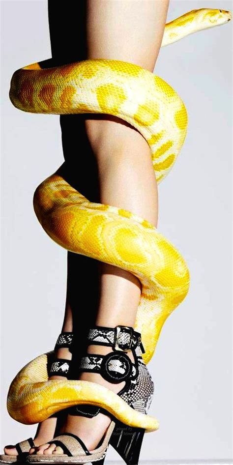 1000 Images About Chic Snake Inspired ∞ On Pinterest