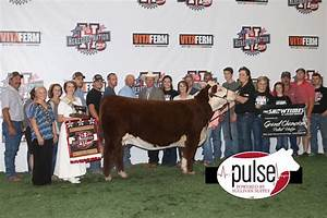 Congrats To Our Show Cattle Friends That Enjoyed ...
