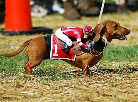 horses dogs equestrian horse looks dog theverybesttop10