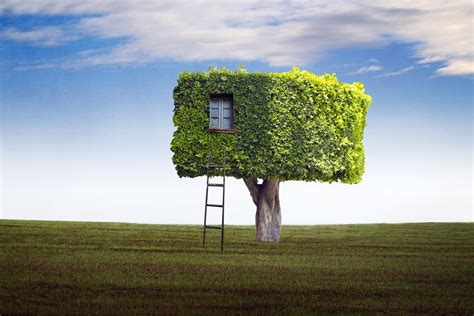 funny tree house wallpapers hd desktop  mobile