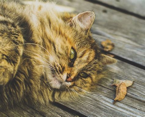 katzenfutter auf rechnung ᐅ katzenfutter auf rechnung bestellen 220 bersicht der top shops