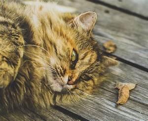 Sportnahrung Auf Rechnung Für Neukunden : katzenfutter auf rechnung bestellen bersicht der top shops ~ Themetempest.com Abrechnung