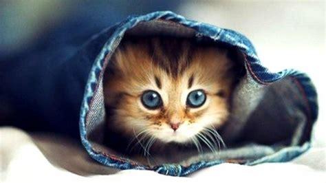 image chat mignon les images de chaton mignon qui vont vous donner un grand sourire archzine fr