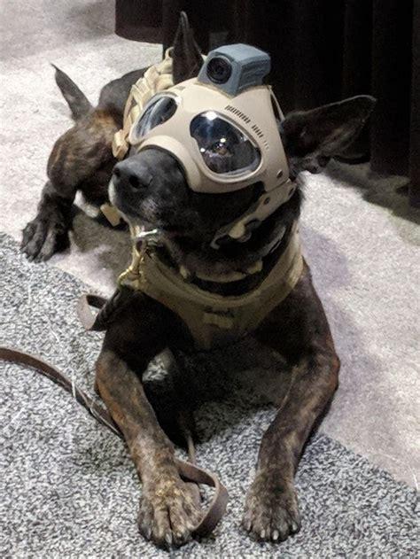 tactical dog helmets  future   dog helmet dog