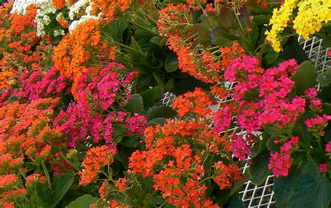 planting time   san diego garden kpbs