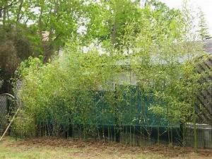 Bambou Brise Vue :  ~ Premium-room.com Idées de Décoration
