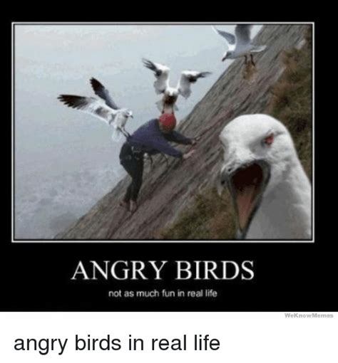 Funny Angry Memes - angry birds not as much fun in real life we know memes angry birds in real life angry birds