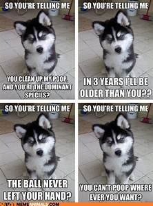 Most funny animal memes and humor pics | Newborn puppies ...