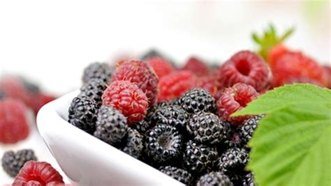 cuisiner les mures framboises et mûres valeur nutritive bienfait santé et