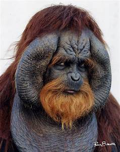 50 Best images about Planet of the Apes - 2001 on ...