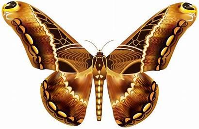 Butterfly Brown Clipart Marrom Borboleta Borboletas Butterflies