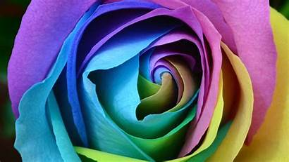 4k Rose Colorful Ultra Wallpapers 1440 2560