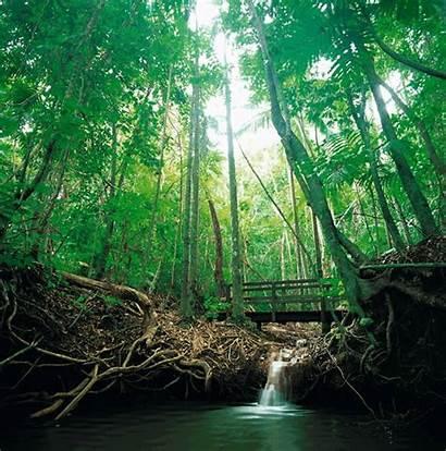 Forest Animated Australia Naturaleza Into Tropical Rainforest