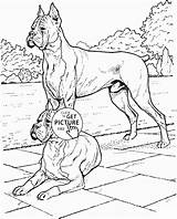 Boxer Coloring Pages Dog Dogs Printable Realistic Printables Wuppsy Print Getcolorings Pets Colors Animals Animal sketch template