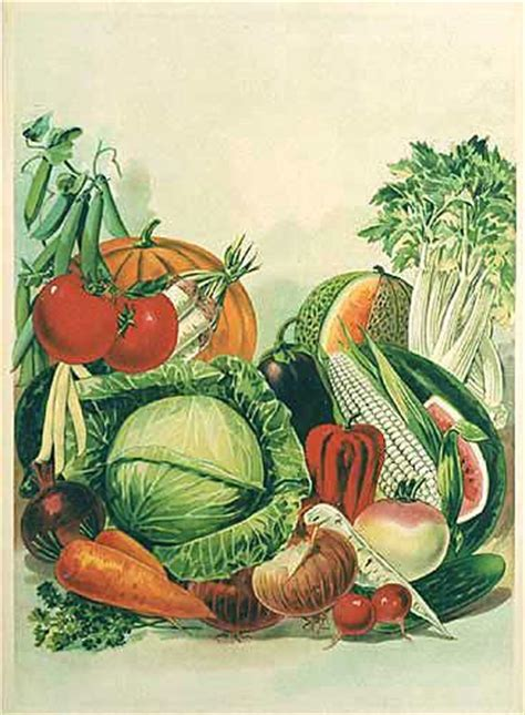 victorian vegetables vintage seed organic food