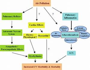 Possible Pathways Linking Air Pollution And Cardiovascular