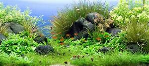 Aquarium Gestaltung Bilder : crustahunter aquascaping voll im trend ~ Lizthompson.info Haus und Dekorationen