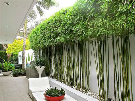 bamboo landscape 10 bamboo landscaping ideas garden lovers club