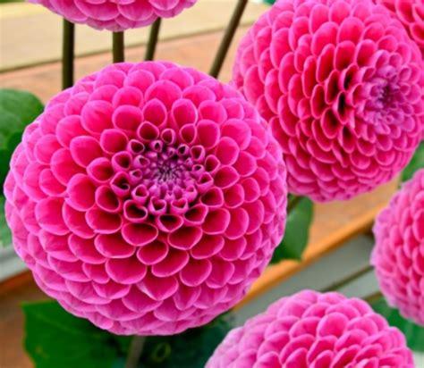 macam macam tanaman hias bunga contohnya