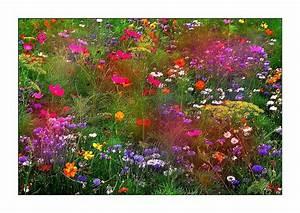 Bouquet De Fleurs : un bouquet de fleurs photo et image fleurs nature images fotocommunity ~ Teatrodelosmanantiales.com Idées de Décoration