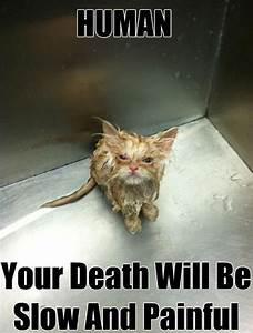 TUXEDO CAT FACTS and PERSONALITY   Funny jokes, Captions ...